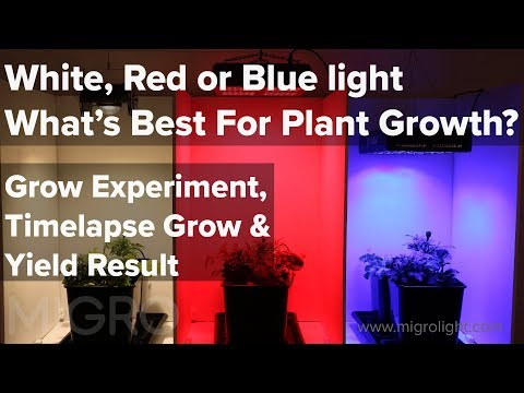 White, Red or Blue light for growing - The best colour for plant growth? Time lapse grow & yield
