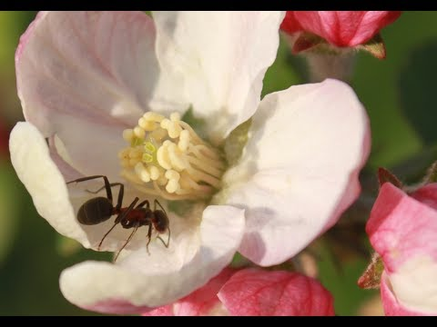 Prevent plants from ants attack