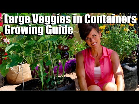 Growing Large Veggies/Fruit in Containers/Complete Guide with Digital Table of Contents
