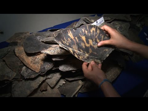 France seizes its largest ever illegal shipment of turtle shells