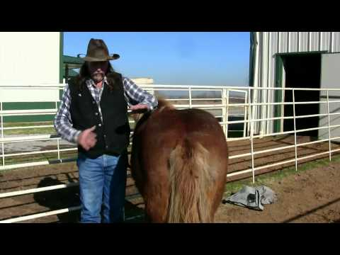 Butt scratching and hair loss on your Horses ! stall13.com