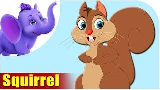 Squirrel - Animal Rhymes in Ultra HD (4K)