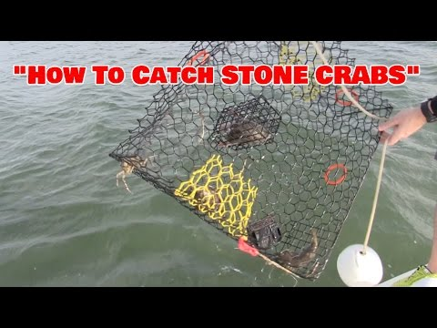 How To Catch Stone Crabs on the