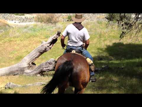 Getting Horse to Jump a Scary Downed Tree- Trail Sacking Out- Horse Confidence