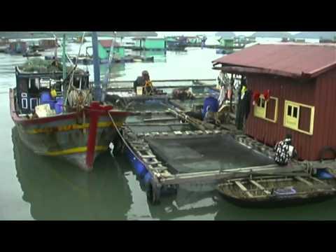 Ha Long Bay, Cat Ba Island, Vietnam Travel Video Guide