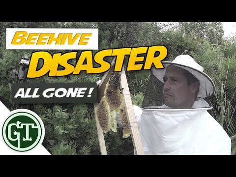 Beehive Disaster - ALL GONE !!   Journey to Beekeeping