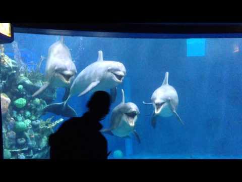 Disneyland Epcot - dolphin presentation