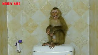 Monkey Kako Crying Very Loudly Because After Take Bath Mother Not Hug And Get Him Out Bathroom