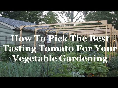 How To Pick The Best Tasting Tomato For Your Vegetable Gardening