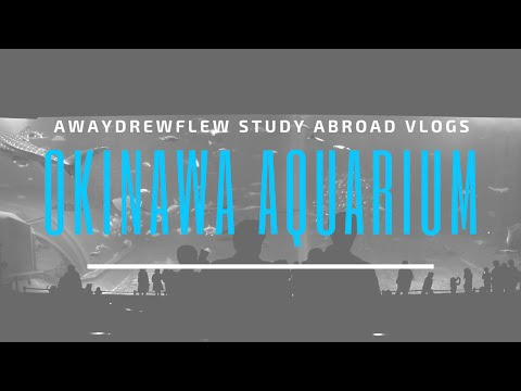 Japan Vlog   Visiting Japan's Largest Aquarium