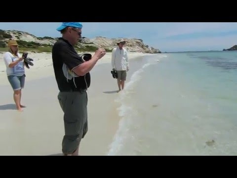 A Short Stroll with a Large Stingray Hamelin Bay Frank di Giovanni 2015
