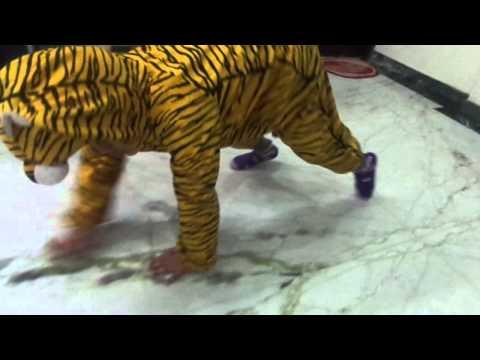 Fancy dress of Rishabh Barai as save Tiger in Natu