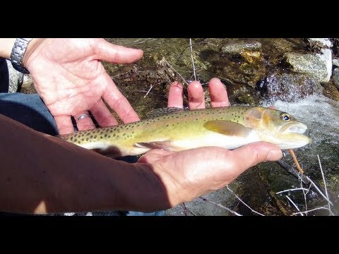 Wild Golden Trout Fishing in Los Angeles Mountains