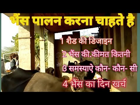 पशुपालन,How To Start A Dairy Farm Business In India Hindi.Cow Buffalo Animals full Information.