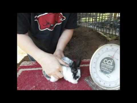 Weaning and Sexing 7 Week Bunnies