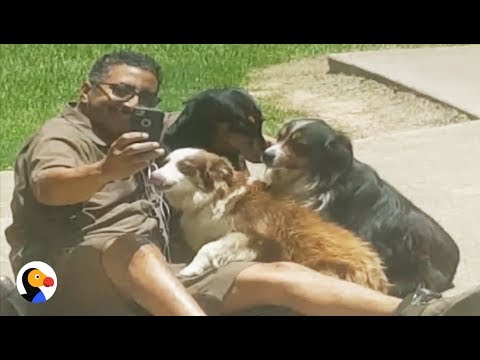 Dogs Take Selfie with UPS Mailman | The Dodo