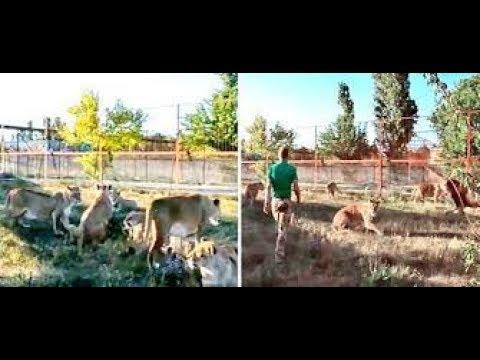 चप्पल लेकर शेरों की ओर दौड़ा लड़का, बोला आज सबक सिखा दूंगा  DU News