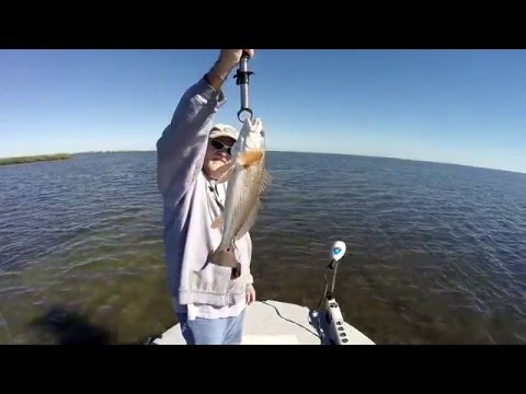 Rockport Texas Redfish