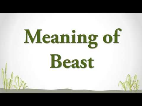 Meaning of Beast