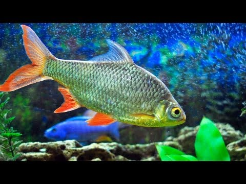 How to Clean Dirty Fish Tank Glass | Aquarium Care