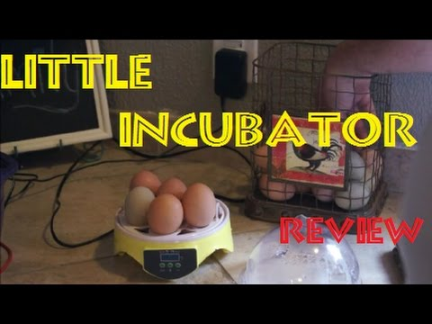 7 Egg Incubator Review