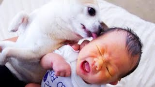 The Dog's Reaction To The Baby For The First Time Is Super 🤣 Fun Baby and Pet Video