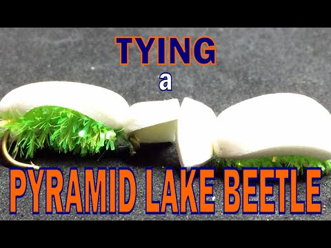 Pyramid Lake Beetle