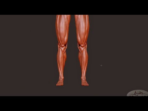 Sculpting Feet Bones Feet and Leg Muscles in ZBrush