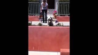 Dalmatian Loves to Jump