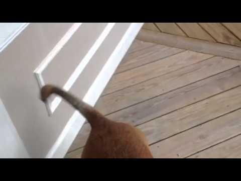 Bloody dog tail