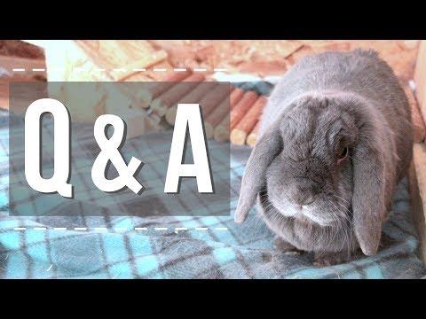 June Q & A