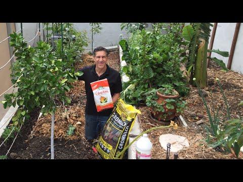 Fertilize Citrus, Avocado & Fruit Trees 3x Each Year--ORGANICALLY!