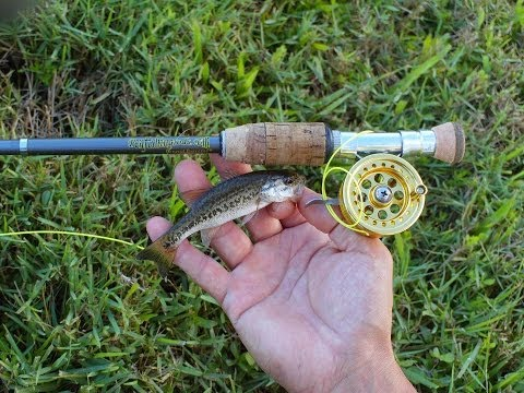 Mini Bass Gone Wild with Micro Fly Reel by Penfishingrods.com