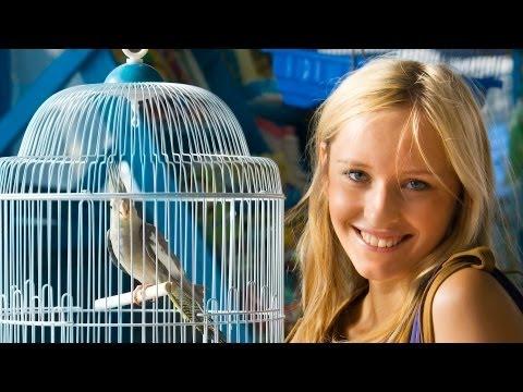 What Are the Best Apartment Birds? | Pet Bird