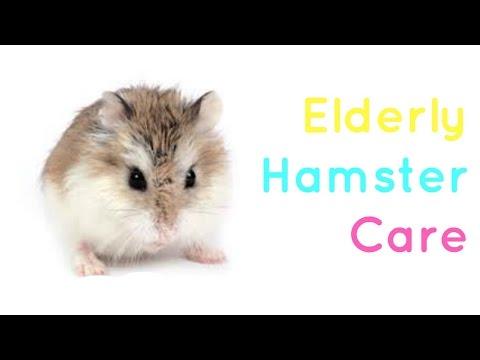 Elderly Hamster Care!