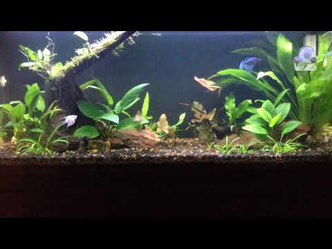 30L Freshwater Planted Tank