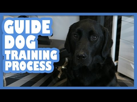Guide Dog Training Process | Lucy Edwards