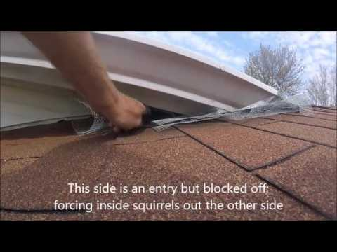How to Trap and Remove Squirrels From Attic