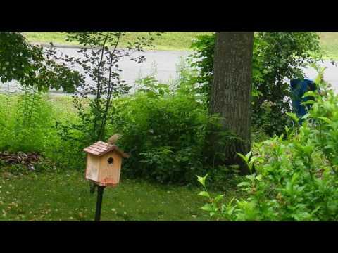 A simple birdhouse to attract backyard birds