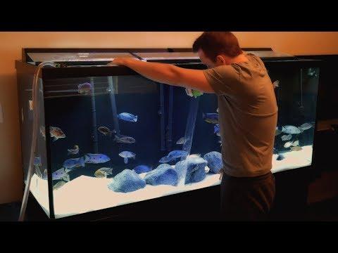 How I Maintain My Fishroom