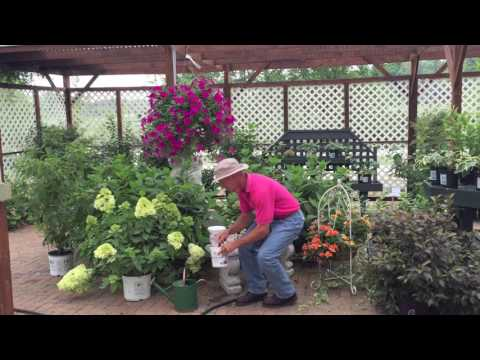 How to Fertilize Your Flowers to Keep Them Looking Fabulous!
