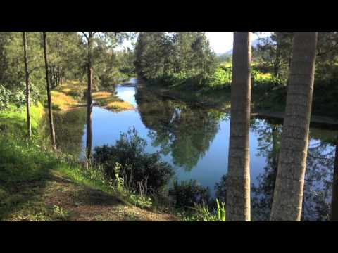 Riverfront Property for Sale Bellingen NSW Australia 1