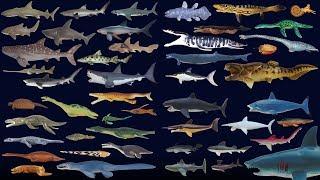 Sharks and Prehistoric Sea Life Collection - The Kids
