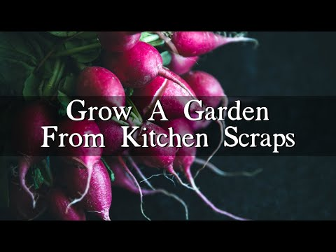 How-to Grow a Vegetable Garden from Kitchen Scraps