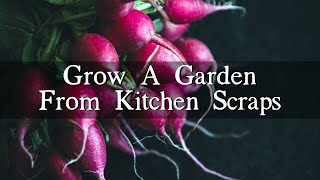 How To Grow A Vegetable Garden From Kitchen Scraps