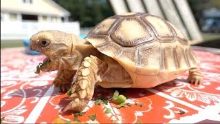 A TORTOISE STORY - Huberts Daily Life