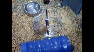 The Pet Shop - Hamster wars