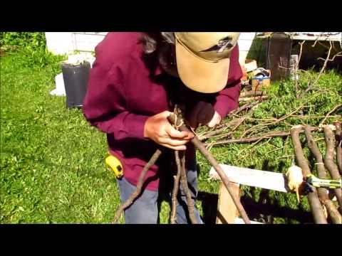 Building A Caragana Trellis