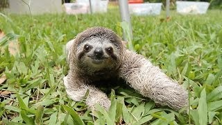 When a Sloth Chases You
