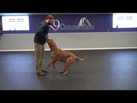 Aggressive Dog Training | K9 Connection Buffalo, NY